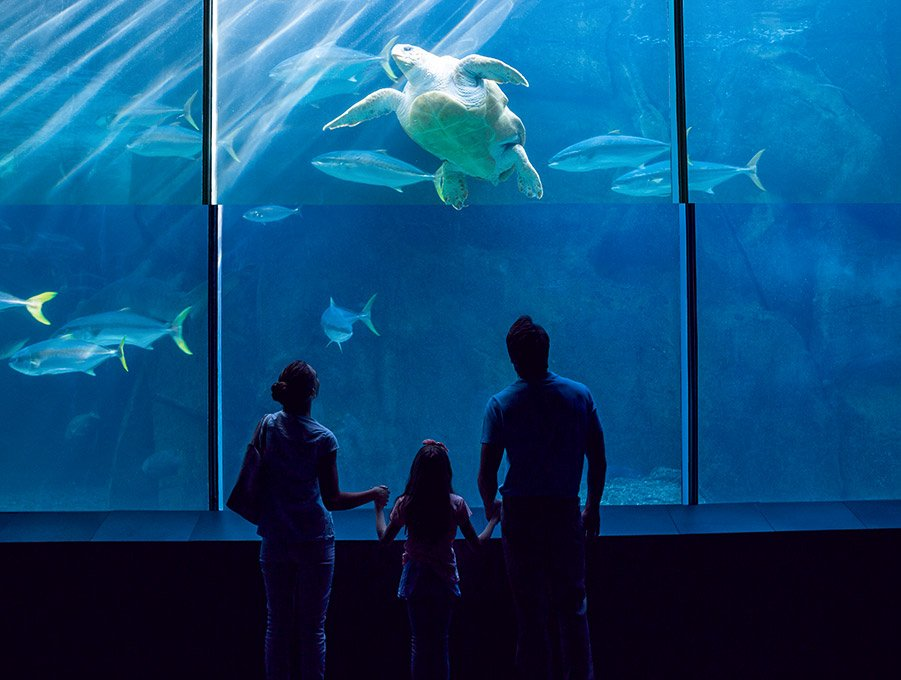Clearwater Marine Aquarium in Clearwater Florida Hotel
